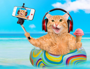 Cat headphones relaxing on air mattress in the sea taking a selfie together with a smartphone.