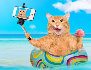Cat  relaxing  on air mattress in the sea taking a selfie together with a smartphone.