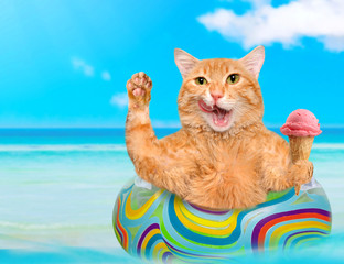Cat  relaxing on air mattress in the sea . Red cat eats ice cream.