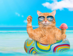 Cat wearing sunglasses relaxing  on air mattress in the sea . Red cat eats ice cream.