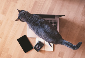 Lazy cat - working concept