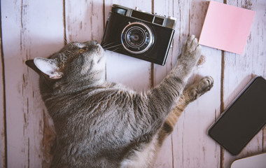 CAt with a camera and a phone