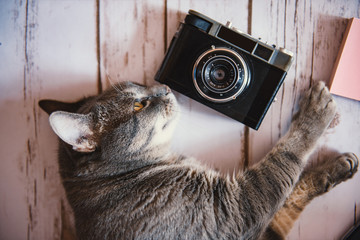 Cat with a vintage camera on the floor