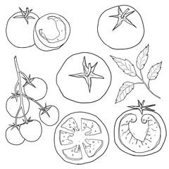 tomato set hand drawn line art illustration