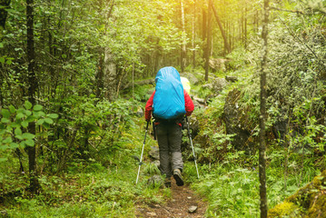 man with backpack hiking in forest, rear view