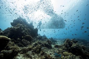 Unterwasser - Riff - Fisch - Fischschwarm - Tauchen - Curacao - Karibik