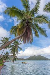 cocotiers penchés à anse l'Amour, Praslin, Seychelles