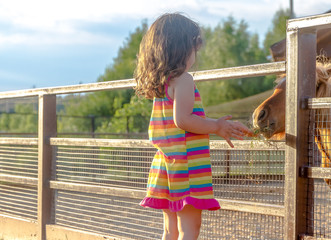 outdoor portrait of young smiling child girl feeding horse on fa