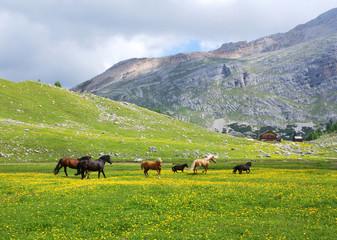 Pferde und Herde in den Dolomiten mit Blick über die Berge Wall mural