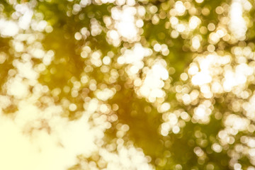 Bokeh background from tree with vintage color style.