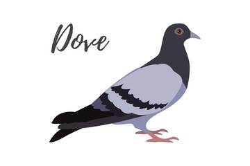 Isolated gray pigeon on a white background, vector illustration