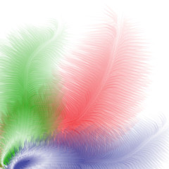 abstract colored feathers on a white background