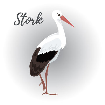 Isolated standing stork bird on a white background, vector illustration, hand drawn