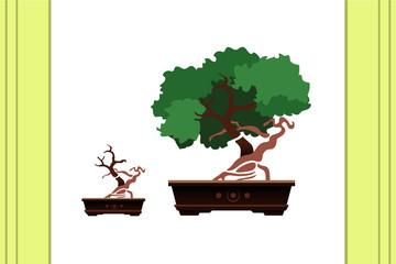 Bonsai. Small tree.