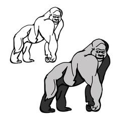 Mountain gorilla outline