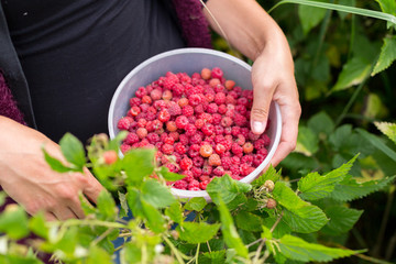 Image of a girl collecting real forest raspberries