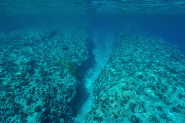 Underwater landscape, barrier reef slope with corals on the ocean floor, Pacific ocean, French Polynesia