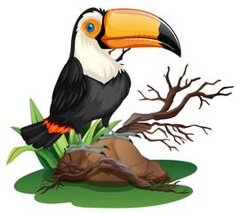 Toucan bird standing on rock