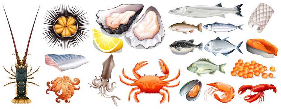 Set of different kinds of seafood