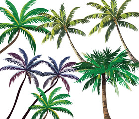 Set of Tropical Palm Trees. Vector collection