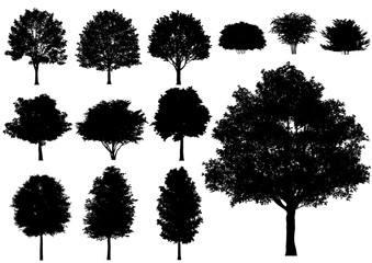 Vector trees isolated on a white background.