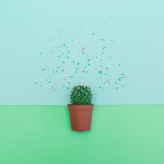 flat lay mini cactus and confetti