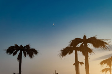 Palm trees against the night sky and the moon