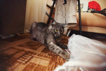 Cat tries to catch bride's veil