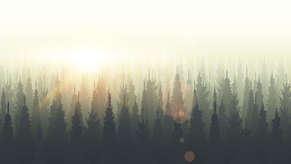 Coniferous forest silhouette template. Sunset, sunrise, dusk