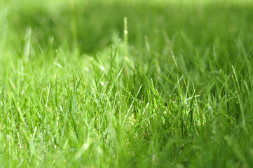 Photo grass, grass background, grass in sunlight, part of the me