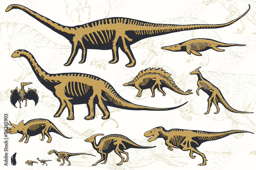 Set of silhouettes of skeletons of dinosaurs and fossils. Hand drawn vector illustration. Silhouettes of man and children, comparison of sizes, realistic size, separated elements.