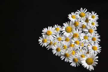 Heart of flowers daisies