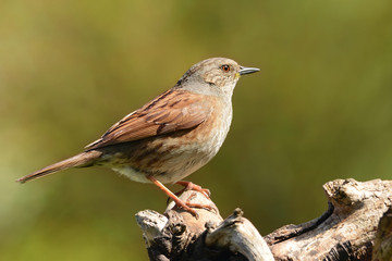 Vögel 6