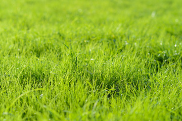 green background by fresh grass