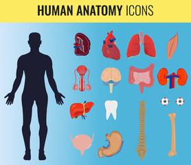 Human organ anatomy set. Vector