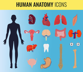 Human organ anatomy set. Vector