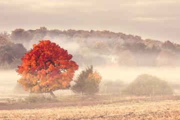Pomerania , Poland/ Autumn Tree.
