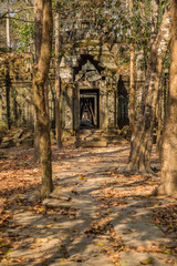 Angkor Wat ruins in rain forest
