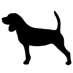High quality silhouette of beagle isolated on white background
