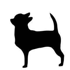 High quality silhouette of chihuahua isolated on white backgroun