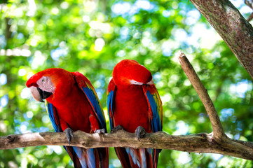 two red ara parrot outdoor