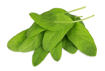 closeup macro shot of sage leafs isolated / nahaufnahme Makro von Salbei Blättern isoliert