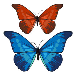 Red and blue beautiful butterfly, vector insect
