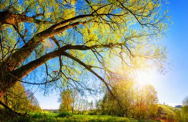 Wall Mural - Die Sonne geht über dem Land auf und scheint durch einen schönen Baum