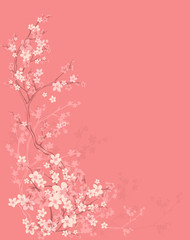 spring background with tree blossom