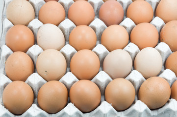 Eggs in paper tray on white,Brown eggs in an egg carton