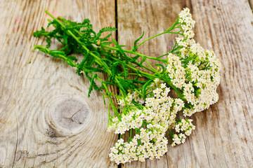 Milfoil Flower