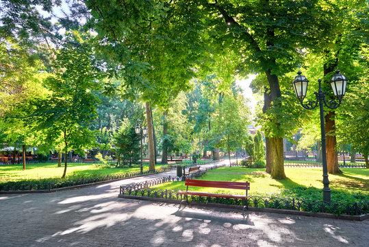 morning in city park, bright sunlight and shadows, summer season, beautiful landscape