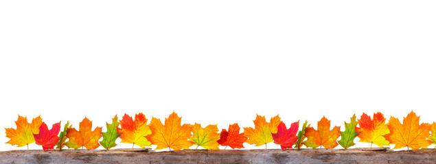 Herbst Ahorn Ranke Freisteller