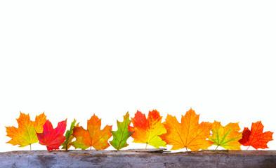 Herbstfreisteller